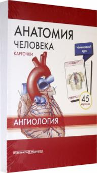Анатомия человека. Ангиология. Карточки (45 штук)