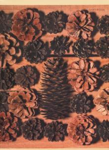 """Тетрадь для конспектов """"Лесная коллекция"""" (48 листов, А4, клетка) (Т4484593)"""