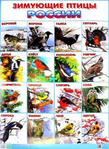 Плакат Зимующие птицы России (550х770)
